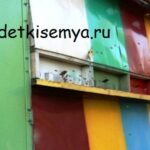 kakoj-med-luchshe-dlya-immuniteta