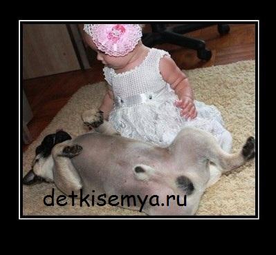стрижка мопса