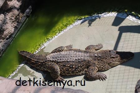 krokodilovaya-ferma