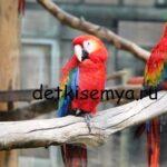 Волнистый попугай - болезни, симптомы