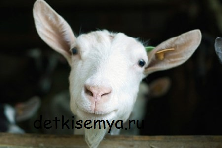 mozhno-li-koze-moloko-pri