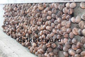 Что лечит грецкий орех