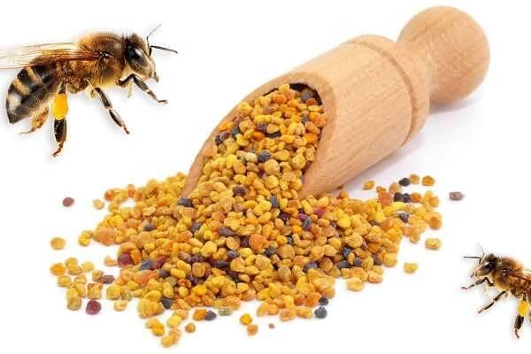 пыльца пчелиная полезные свойства и применение