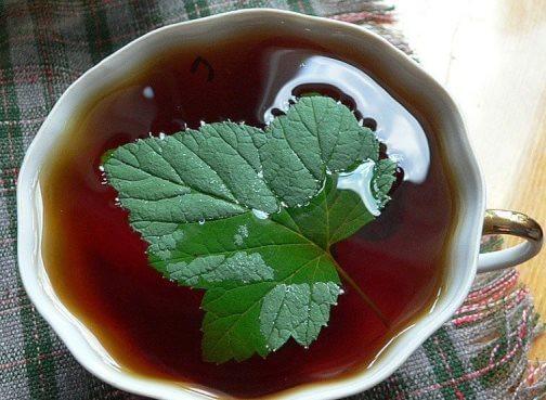чай от давления с листьями смородины
