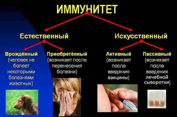 повышает иммунитет человека домашних условиях
