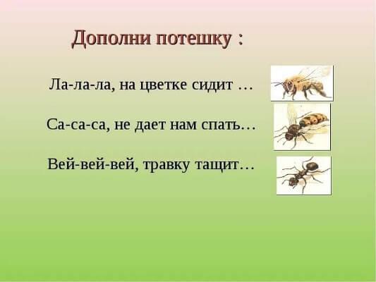 загадки на логику про насекомых