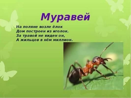 загадки про муравья для дошкольников