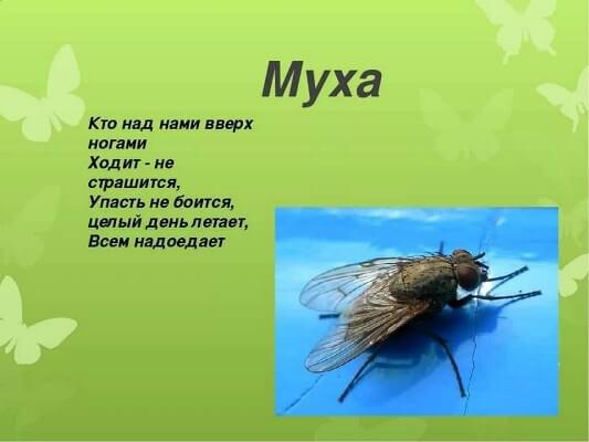 стихи и загадки про мух