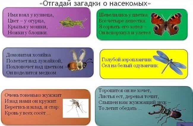 загадки про ящериц с ответами