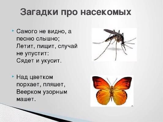 загадки про комаров с ответами