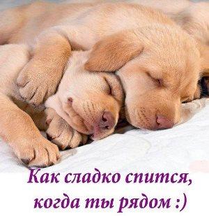 спокойной ночи девушке стихи красивые картинки