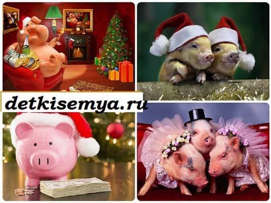 картинки на новый год свиньи