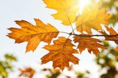 стих про осень 5 6
