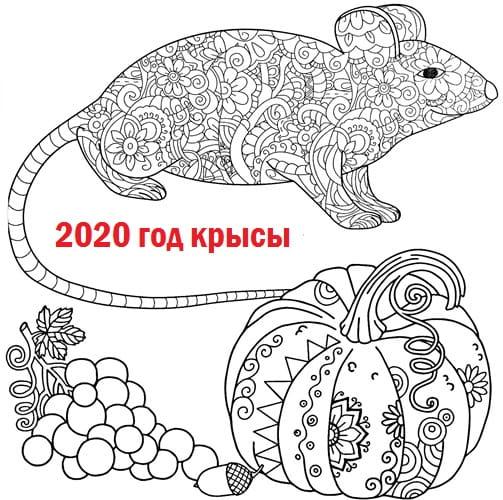антистресс рисунок крыса