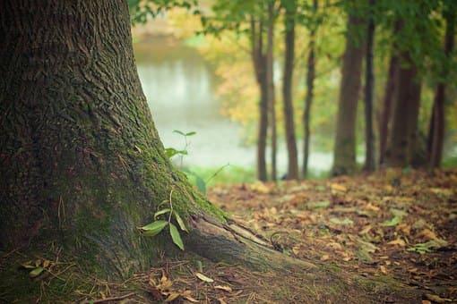стихи тютчева про природу которые легко учатся