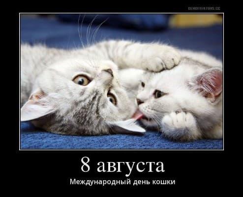 всемирный день кошек картинки и открытки