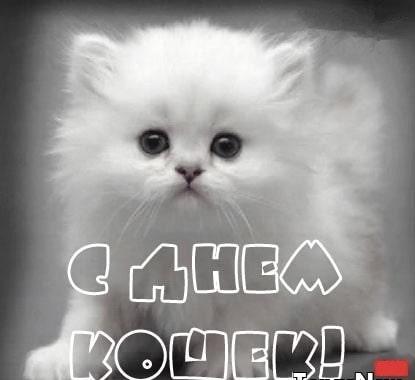 день кошек картинки гиф