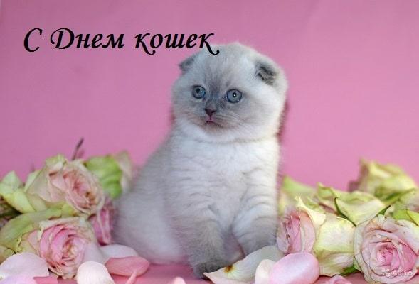 день кошек картинки прикольные скачать бесплатно