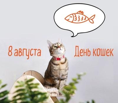 день кошек картинки поздравления