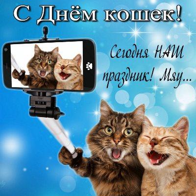 день кошек картинки красивые